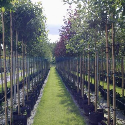 Container bomen